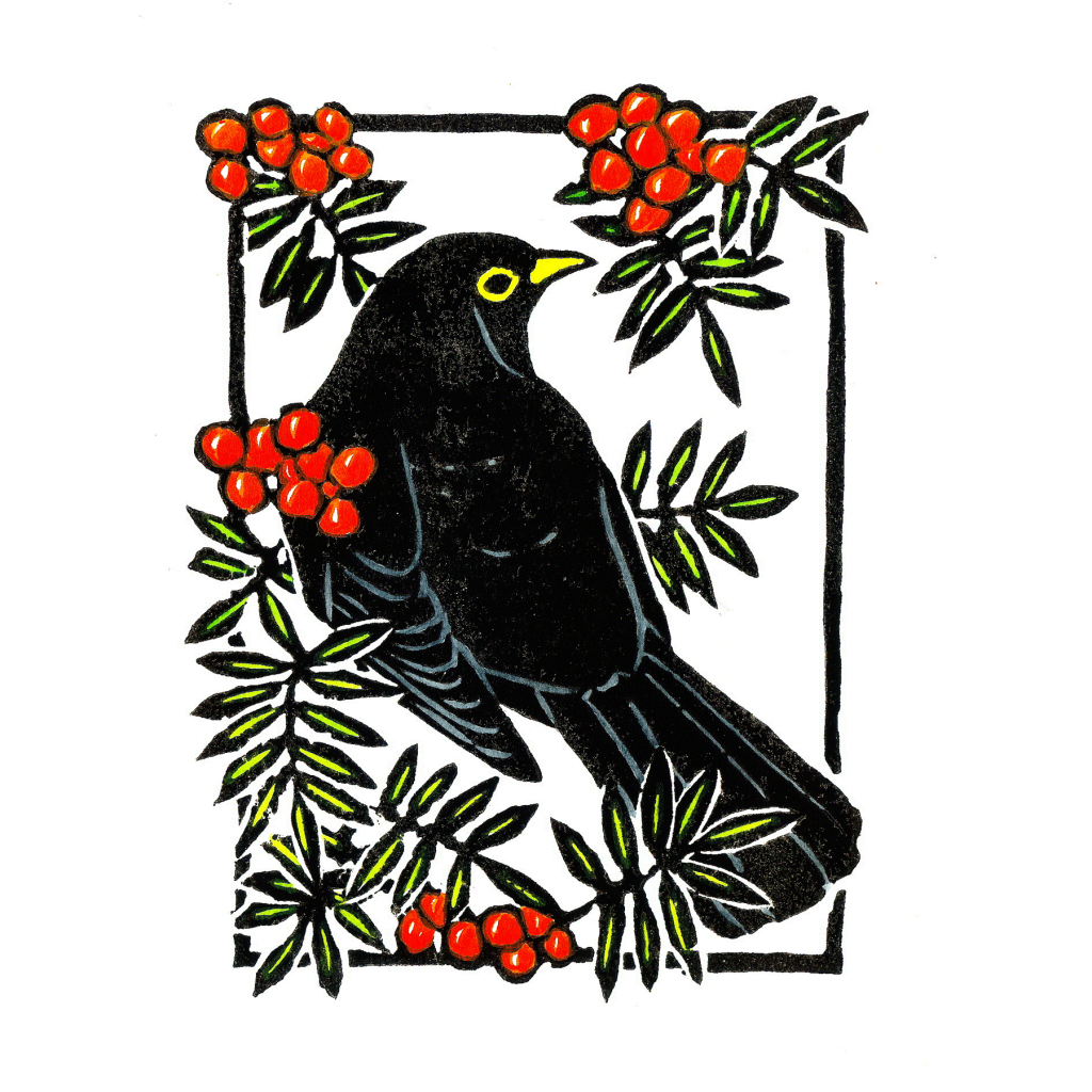 Rowanberry Blackbird