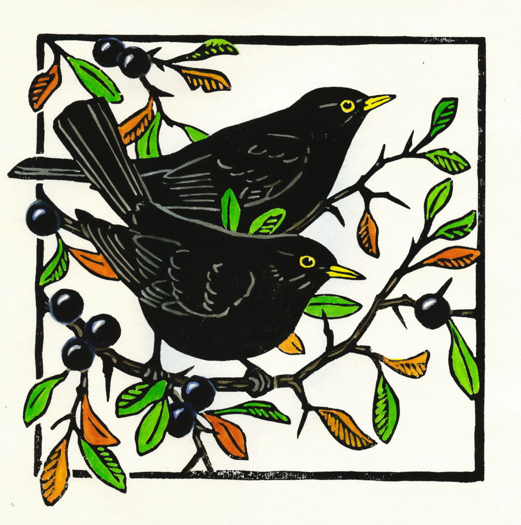 Blackthorn Blackbirds