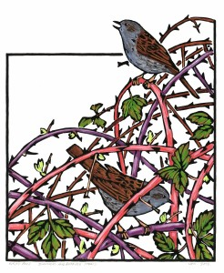 Dunnocks and Bramble Stems